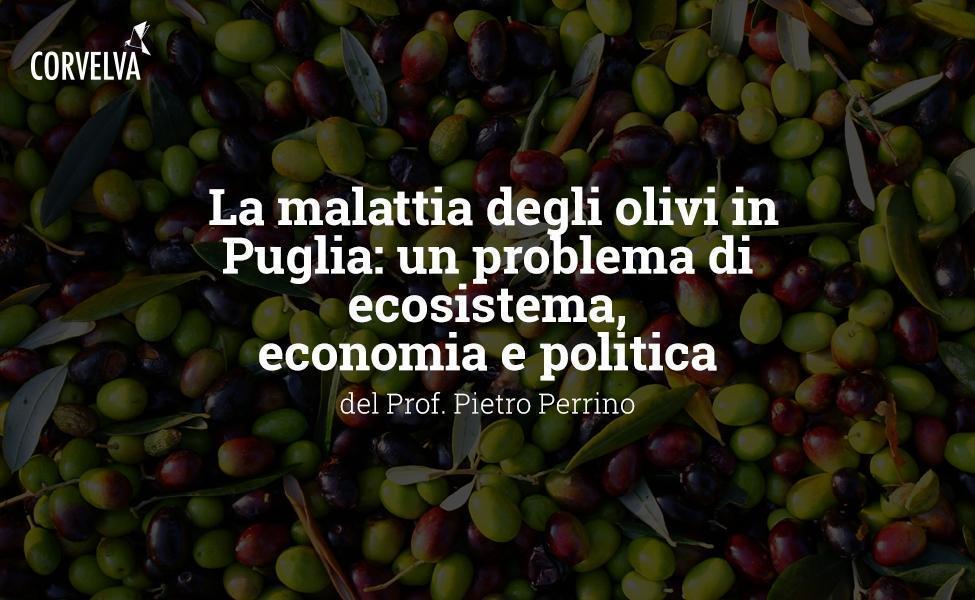A doença das oliveiras na Apúlia: um ecossistema, economia e problema político
